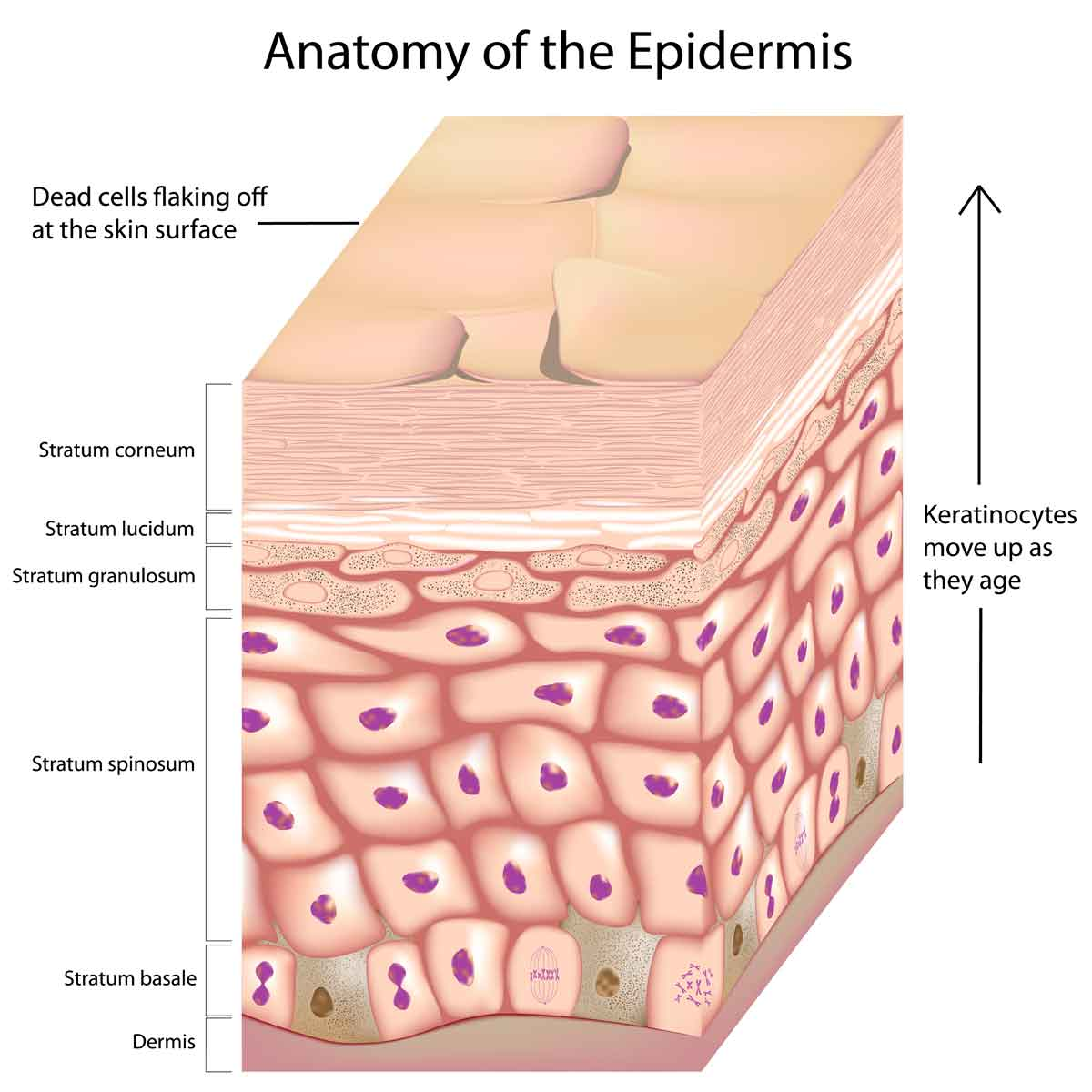 Dermatology care at GA Derm Center includes medical care and